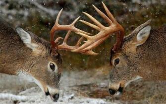 deer iphone hd wallpapers Desktop Backgrounds for HD Wallpaper