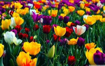Spring Wallpapers HD download