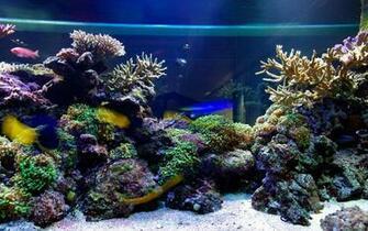 3d Desktop Aquarium Live Wallpaper Download