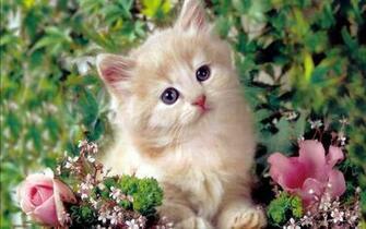 Cute Kitten   Kittens Wallpaper 16122928