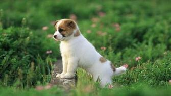 Cute puppy wallpaper   388822
