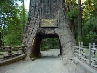 Redwood National Park FlyLadynet