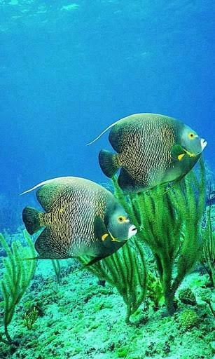 Download Fish Aquarium Live Wallpaper for Android by bittu boss