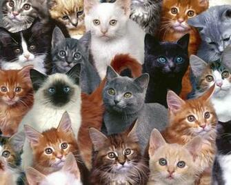 Cats wallpaper   Cats Wallpaper 5194935