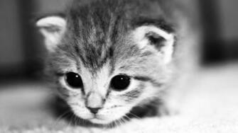 Download Wallpaper 2048x1152 Kitten Face Eyes Cute HD HD Background