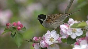 bird and flowers   134213   High Quality and Resolution Wallpapers