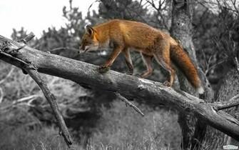 wildlife wallpaper animals images 1920x1200