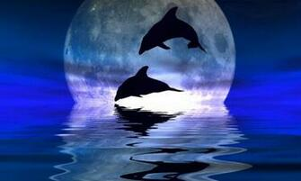 Dolphin Tonight Pictures Desktop Wallpaper Dolphins Pictures