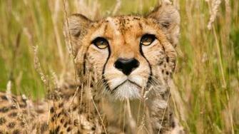 Wildlife Wallpapers Desktop Wallpapers