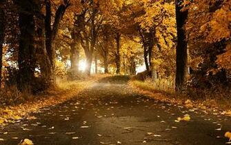 Beautiful Autumn Wallpaper 2560x1600