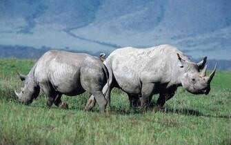the Wildlife Wallpapers Wildlife Desktop Wallpapers Wildlife