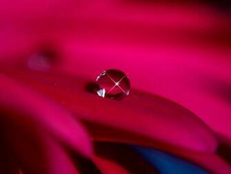 Dew Wallpaper   The Captured Beauty