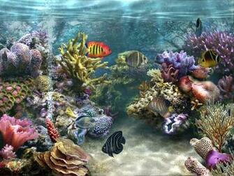 aquarium fish wallpaper free downloadjpg