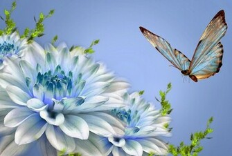 Butterfly hd wallpapers HD WALLPAPERS