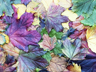 Textrends Color trends fallwinter 20202021 in 2019 Fall color