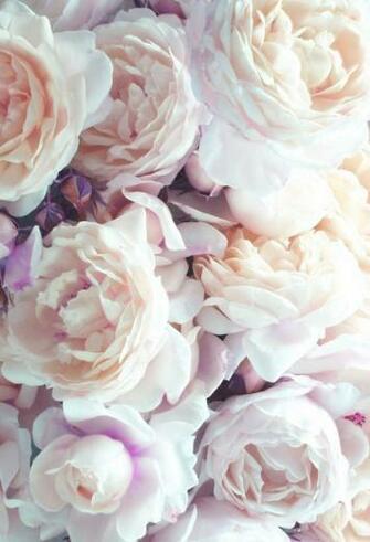 flower photography on Tumblr