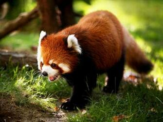 HD wallpaper Cute Animal Wallpapers For Desktop Cute Animals by