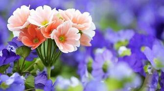 download of flowers wallpapers for desktop