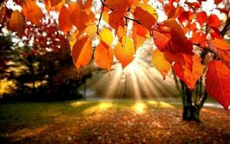 Fall Laptop Wallpapers   Top Fall Laptop Backgrounds