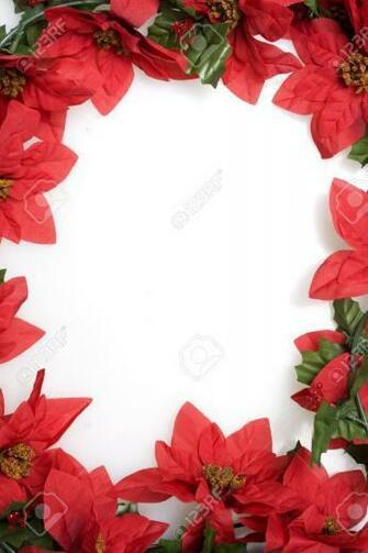 Christmas Red Poinsettias Background Over White Stock Photo