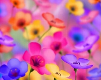 flowers for flower lovers Flowers background desktop wallpapers