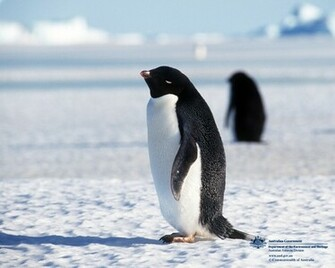 Penguins Cute Animals and Beautiful Photos