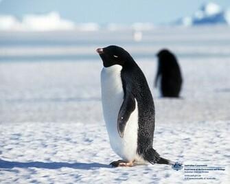 Penguins Cute Animals and Beautiful Photos