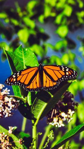Download wallpaper 2160x3840 monarch butterfly butterfly bright