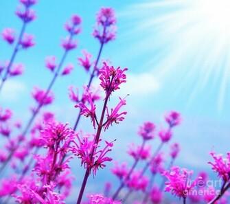 Spring Flower Background by Anna Omelchenko