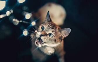 Wallpaper lights wallpaper animals cat glare blur bokeh