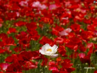 Flowers Wallpaper 146
