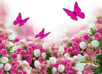 roses tulips leaves flower butterfly HD wallpaper