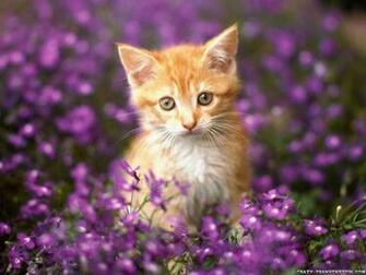 wallpapers cats wallpapers of cat wallpapers of cats wallpapers