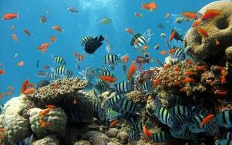 sea ocean fish wallpapers and images   wallpapers pictures photos