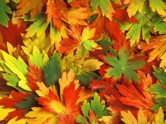 of autumn beautiful leafs autumn leaf scene fresh autumn leafs