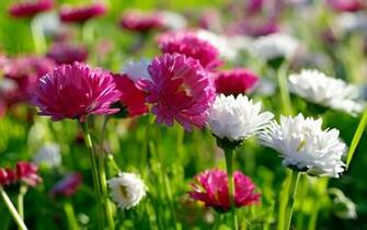 spring flowers New Spring Flowers wallpaper download