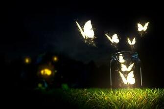 Glowing Butterfly Wallpaper HD Wallpaper Butterfly lighting