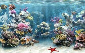 34 Amazing 3D Aquarium background WHG