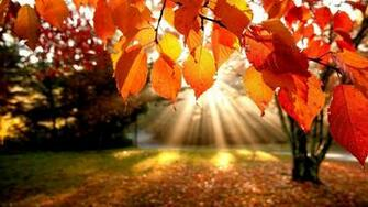 Autumn Leaves Desktop Wallpaper 57 images