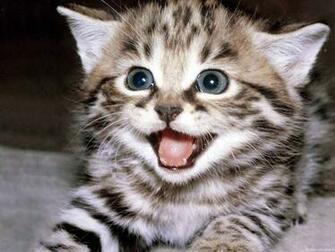 Cute Kittens Desktop Hd Walpapers Photos Cute Kittens Desktop Hd