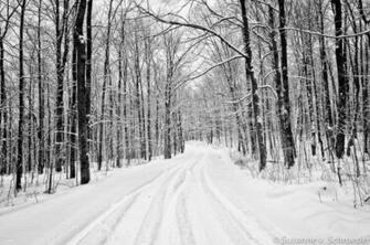 Soul Centered Photography Black and White Winter Photography