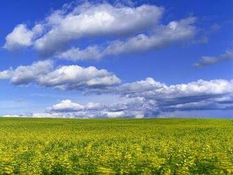 Download Field With Flowers Under The Sky Wallpaper Apps Directories