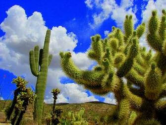 Best 41 Saguaro National Park Wallpaper on HipWallpaper