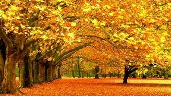 parks 1600x900 wallpaper Autumn Wallpapers Desktop Wallpapers