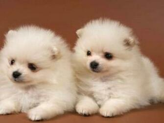 Cute Puppies HD Wallpapers HD Wallpapers 360