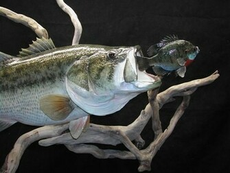 SAUGER MOUNT and LARGE MOUTH BASS Reproduction Mount   Pro Fish