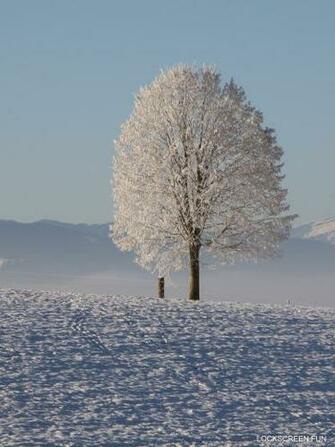 SNOW tree free ipad mini background wallpaper lockscreenjpg