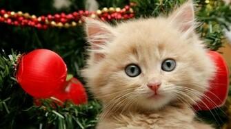 Beautiful persian at in christmas festival