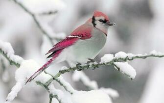 Nature winter bird snow branch wallpaper 2560x1600 309884
