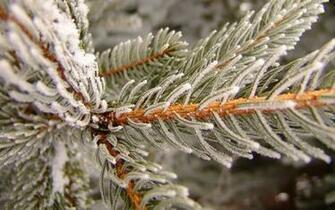 Download Winter Scenes Wallpaper 38   Wallpaper For